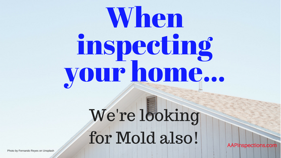 Looking for Mold During the Inspection