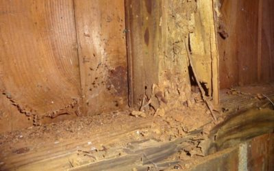 Termite Inspection: 6 Vital Places You Shouldn't Overlook